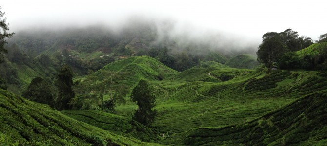 Tanah Rata & The Cameron Highlands